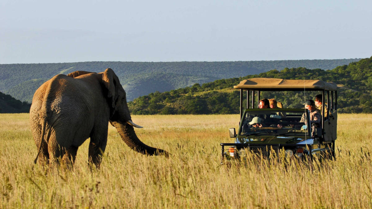 cango wildlife ranch the garden route and the little karoo 6 - ЮАР. Гарден Рут