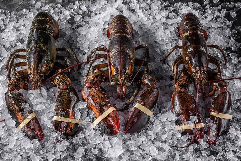 Lobstery1 - Повеселиться, особенно поесть