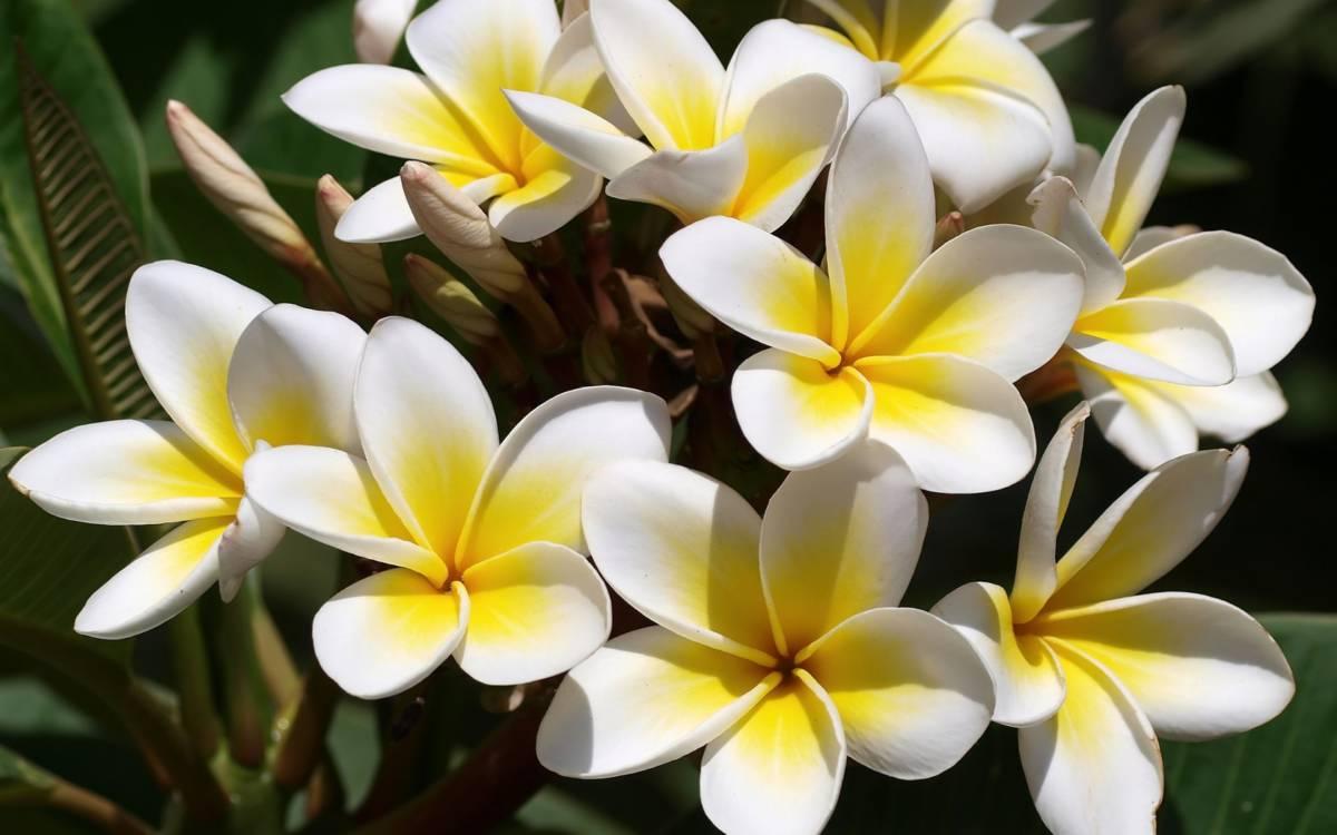380770 frangipani - Остров Маэ. Не только пляжи