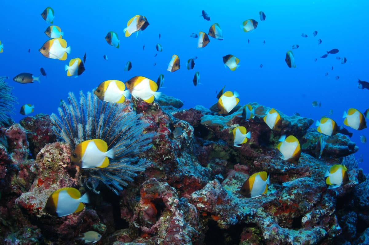 underwater201 - Северные Марианские острова. Вечное лето
