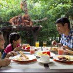 Breakfast 150x150 - Singapore_Zoo