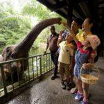 Elephant feeding 150x150 - STB-Singapore
