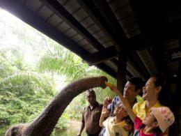 Сингапурский зоопарк. Накорми слона