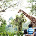Giraffe 150x150 - f2efca347e8a8397c4d821e0517c9918_p