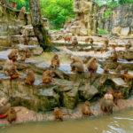 s1200 150x150 - Singapore_Zoo