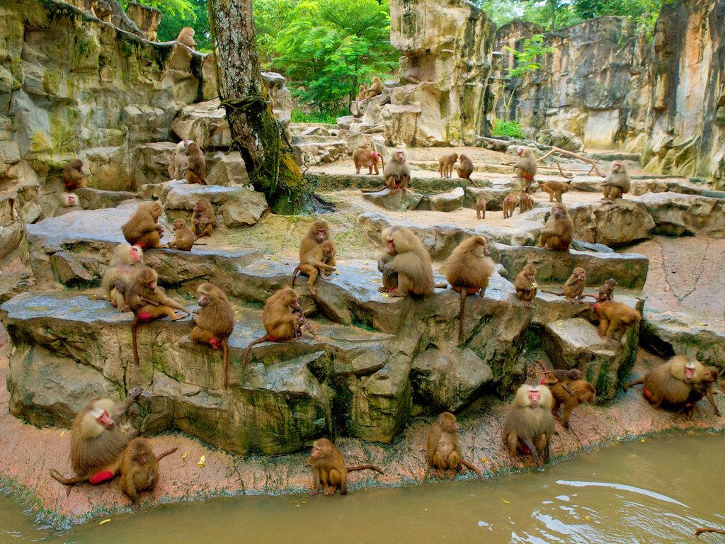 s1200 - Сингапурский зоопарк. Накорми слона