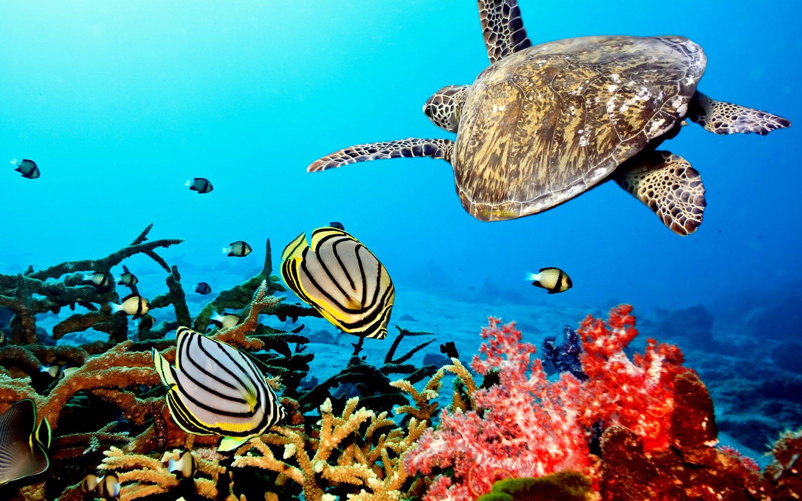 0933f0cb4ee0a4a - Мальдивы. Открытие JW Marriott Maldives Resort & Spa