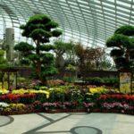 Singapore Gardens by the Bay flowers 150x150 - 0_bfa40_4eab710e_orig