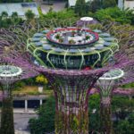Singapore Gardens by the Bay viewed from Marina Bay Sands 10 150x150 - Singapore-Gardens-by-the-Bay-flowers