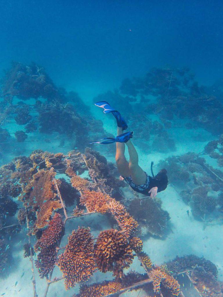 Sheraton Maldives 2 768x1024 - Мальдивы. Усынови коралл