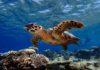 Кубик жизни. Как Baros Maldives защищает океан